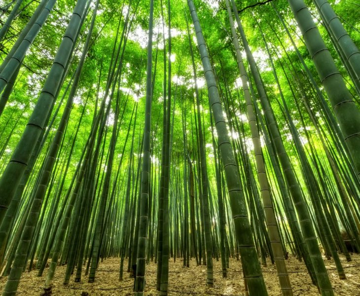 bamboo forest - benefits of using bamboo
